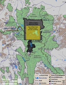 The land area of all 9 tracts of Mark Twain National Forest (in yellow) is a fraction of the Greater Yellowstone Ecosystem. Map by John May from sources at Yellowstone National Park and Mark Twain National Forest.